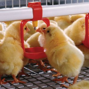 Lubing Layers/Pullets Water System